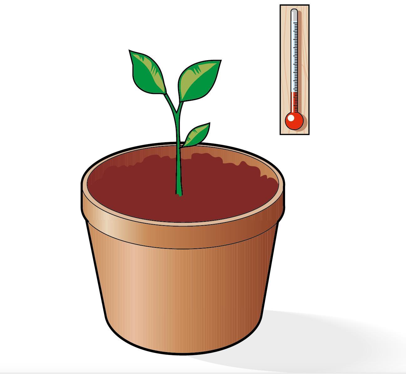 Cura Del Ficus Benjamin ficus benjamin, che cosa fare se perde le foglie - cose di casa