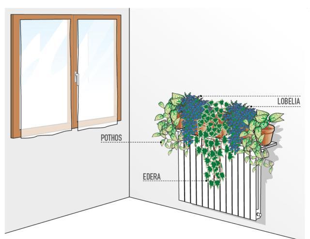 Per nascondere un termosifone lungo circa 100 cm, suggeriamo di posizionare 5 vasi del diametro di circa 18-20 cm, ognuno con una pianta dallo sviluppo di circa 40 cm. Suggeriamo di mettere in sequenza: pothos, lobelia, edera, lobelia e pothos.Se il termosifone si trova in prossimità di una finestra, sarà opportuno schermare la zona con delle tende che filtrino l'irraggiamento diretto senza inficiare la luminosità dell'ambiente.