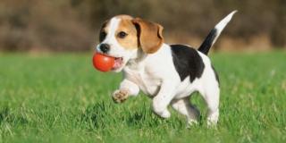 Creare in giardino un percorso di agility dog