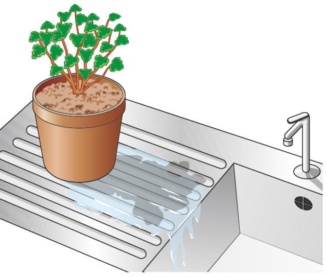 3. Una volta estratto il vaso dall'acqua lo si lasci scolare in modo che tutta quella in eccesso defluisca.