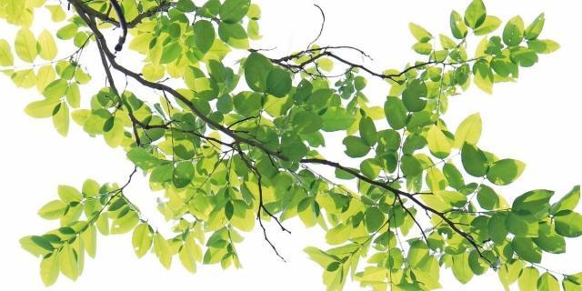 Sostenere i rami in pericolo di un vecchio albero