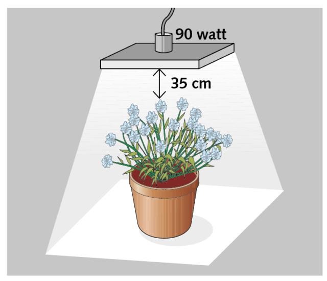 Per una sola pianta un led da 90 watt posizionato a una distanza di circa 35 cm dall'apparato fogliare, illuminerà perfettamente un'area di circa 65 cm di lato