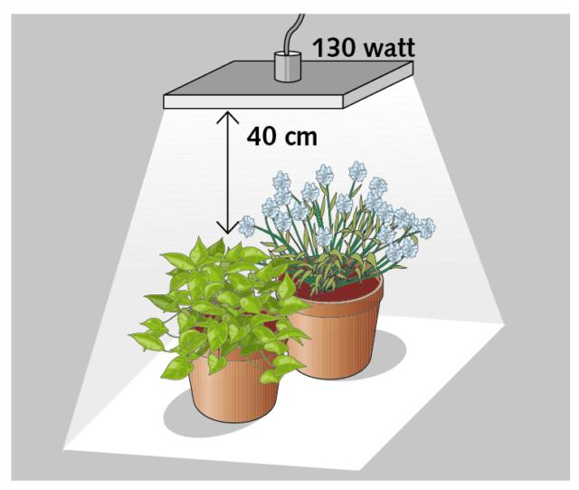 Per due piante, un corpo illuminante led da 130 watt posizionato a una distanza di circa 40 cm dall'apparato fogliare, illuminerà un'area di circa 80 cm di lato