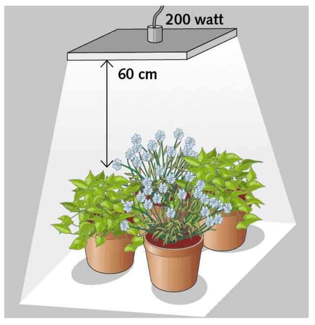 Per quattro piante un corpo illuminante led da 200 watt posizionato a una distanza di circa 60 cm dall'apparato fogliare, illuminerà un'area di circa 90 cm di lato