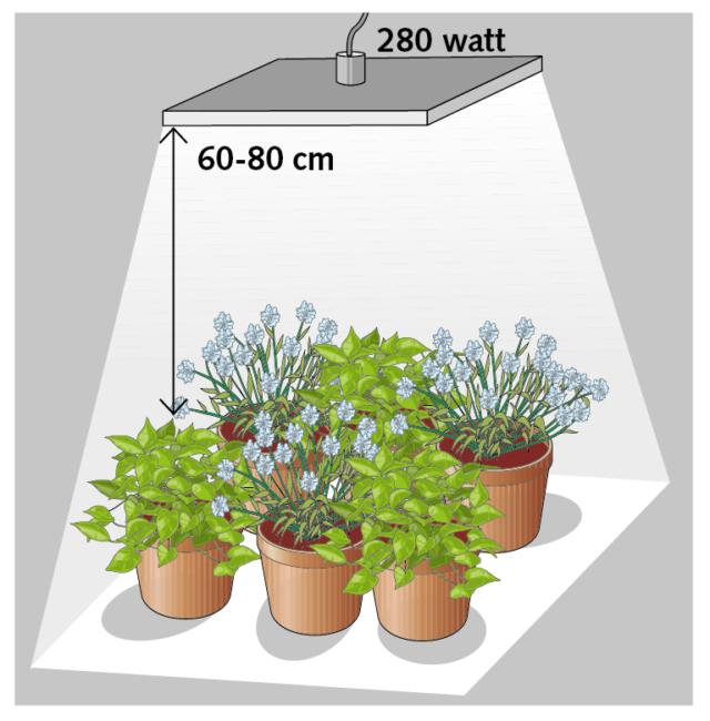 Per sei vasi circa un corpo illuminante led da 280 watt posizionato a una distanza di circa 60-80 cm dall'apparato fogliare, illuminerà un'area di circa 100 cm di lato.