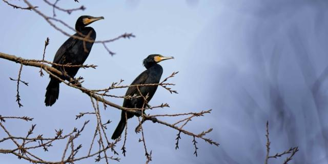 Birdwatching: l'arte di osservare gli uccelli
