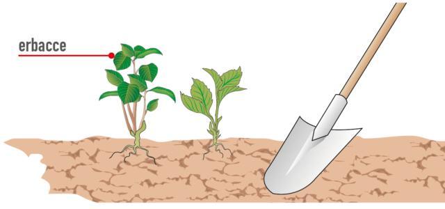1. Qualche giorno prima delle operazioni di semina, si provveda a controllare il terreno per estirpare con badile o pala tutte le infestanti ricomparse sul terreno.