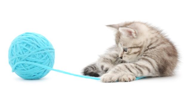 Dieci strani comportamenti del gatto