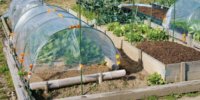 Nell'orto, è ora di seminare gli ortaggi autunno-invernali