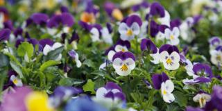 Preparare le fioriere per il terrazzo autunnale