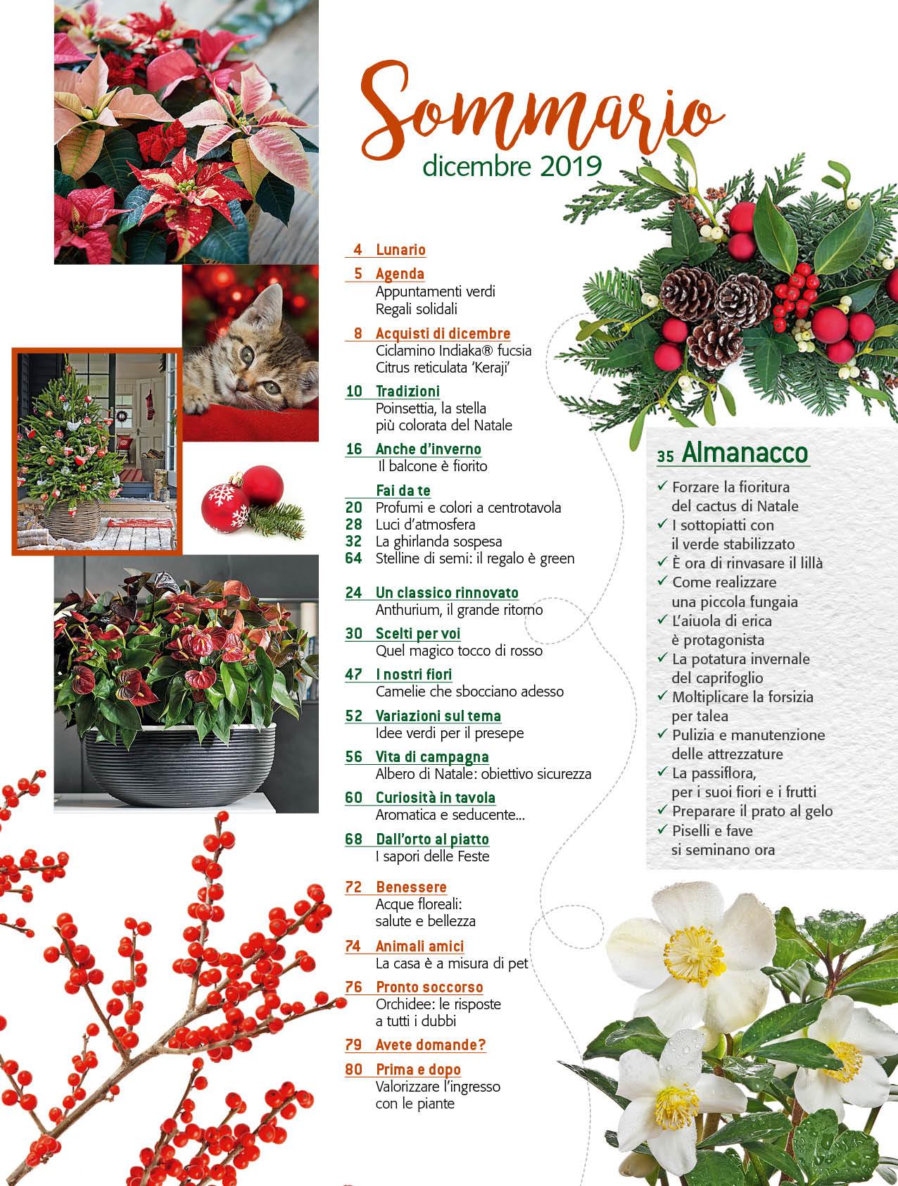 In Edicola Dal 28 Novembre Casa In Fiore Di Dicembre 2019 Cose Di Casa