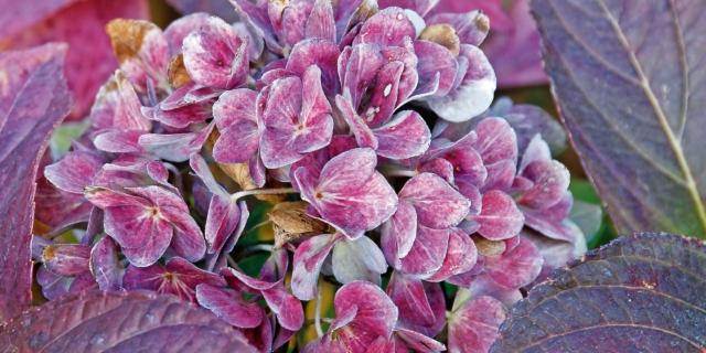 I fiori di novembre in giardino