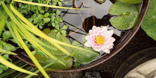 Cure di stagione per le piante acquatiche e gli animali