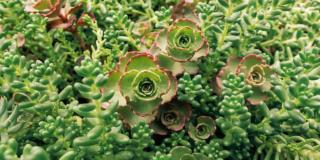 Le piante grasse che resistono al freddo