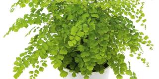 Fertilizzare le piante da interni