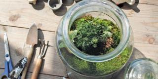 Terrarium: il giardino sotto vetro