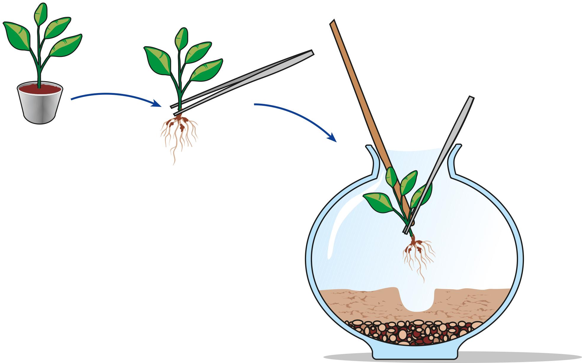 Bagnare Piante Con Bottiglie terrarium: il giardino sotto vetro - cose di casa