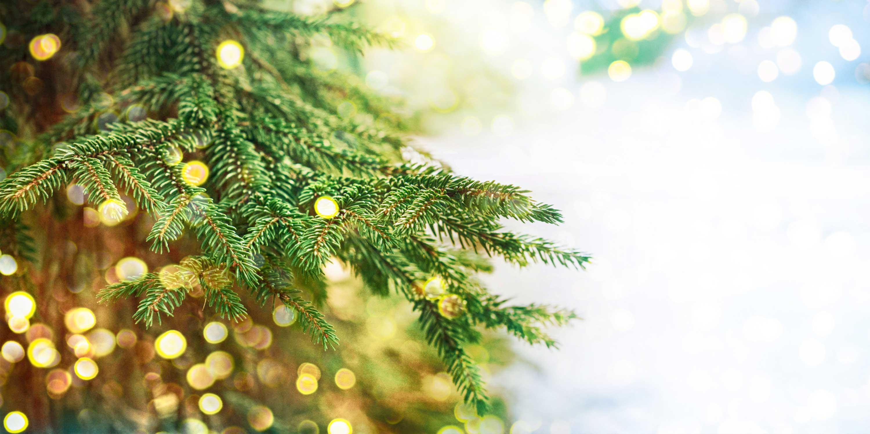 Albero Di Natale Vero Come Farlo Sopravvivere.Albero Di Natale Vero Come Farlo Sopravvivere Al Meglio Cose Di Casa