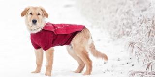 cane al freddo con il cappotto