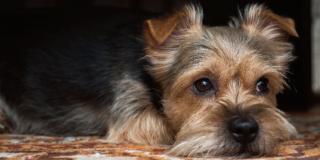 In caso di separazione, a chi sarà affidato il cane?