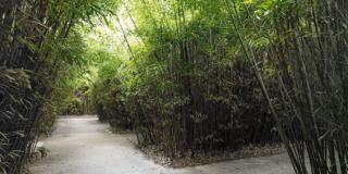 Alla scoperta del labirinto di bambù