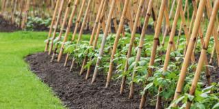 Nell'orto: i tralicci per gli ortaggi rampicanti