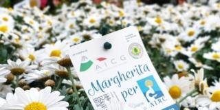 Margherita per Airc: il fiore della purezza diventa solidale