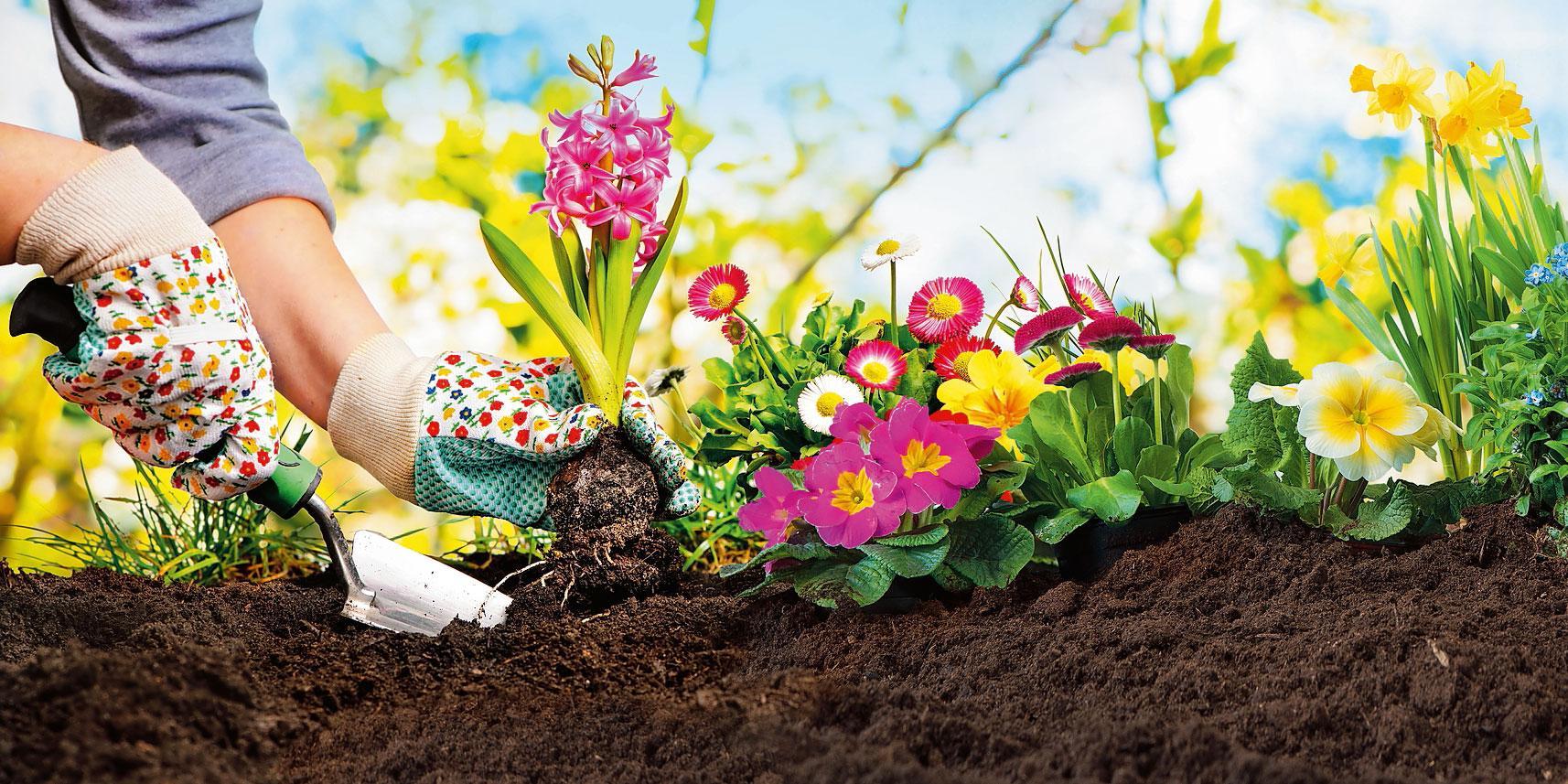 Fiori Da Vaso Perenni le piante per l'aiuola fiorita - cose di casa
