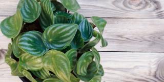 Come moltiplicare le piante di casa