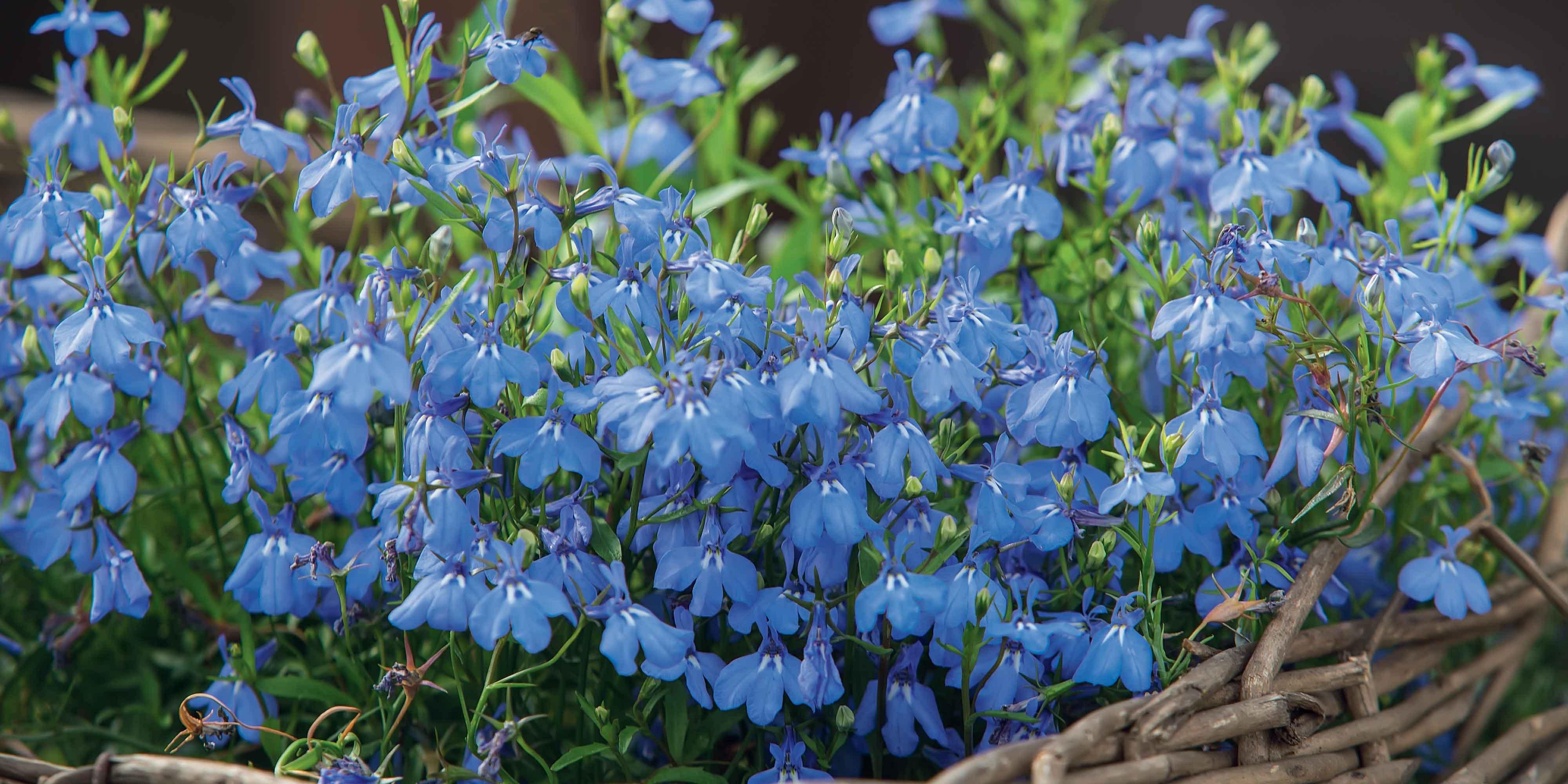 Fiori Da Balcone Ombra la cassetta fiorita sul davanzale - cose di casa