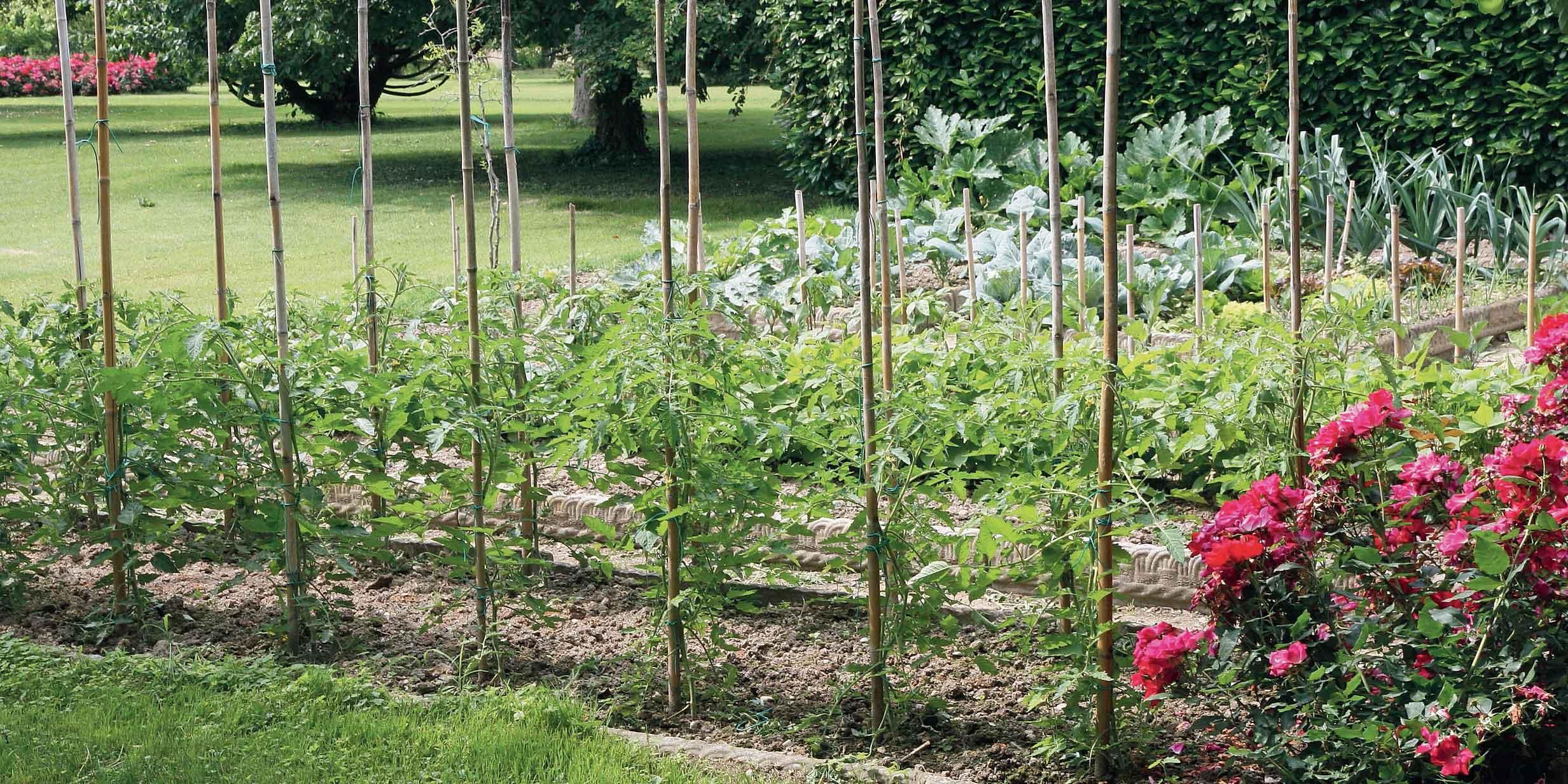 Varietà Zucchine Da Fiore ortaggi rampicanti, se c'è poco spazio - cose di casa