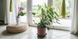 Piante in casa, sette errori da evitare