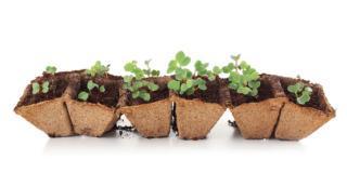 Fiori: meglio seminare o acquistare piante già pronte?
