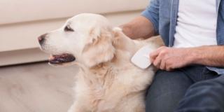 Eliminare i peli del cane (o del gatto) da casa