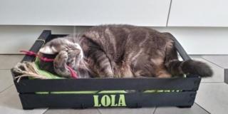 Cuccia per gatto con cassetta di legno per frutta