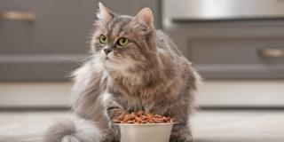 Pappa del gatto: età, obesità, rifiuto del cibo