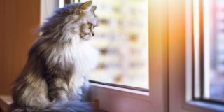 Cane e gatto: a casa da soli per il fine settimana