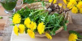 Riconoscere e raccogliere le erbe spontanee commestibili