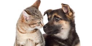 In viaggio con il cane o il gatto: che cosa occorre