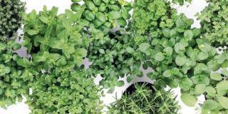 Cure alle piante aromatiche in vaso