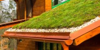 Creare il tetto verde sul capanno degli attrezzi