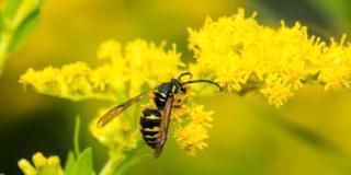 Vespe e calabroni: come allontanarli dal giardino