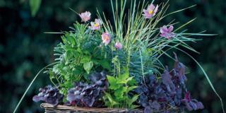 La composizione di piante sempreverdi da esterno