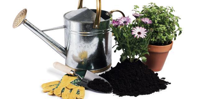 Il rinvaso delle piante di casa: come si fa