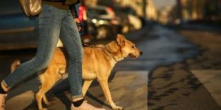 Il cane in città, regole di convivenza
