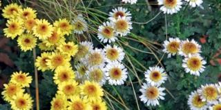 I fiori di ottobre