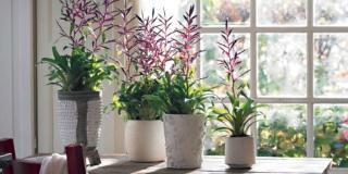 Bromeliacee: le piante regalo più belle e facili
