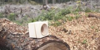 Un esempio di recupero di alberi abbattuti, tra sostenibilità ed economia circolare