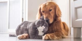 Cane e gatto, possono convivere?