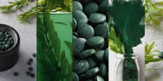 bioenergia dalle alghe
